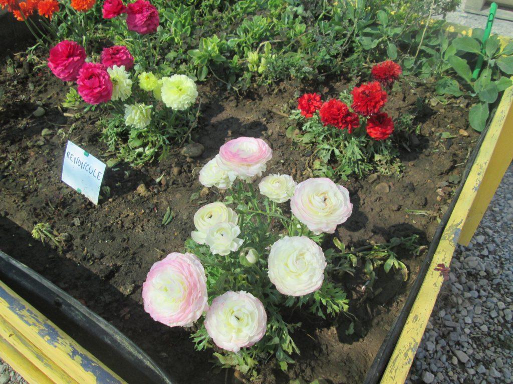 les-petits-fermiers-fleur