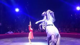 cheval-cirque-arlette-gruss