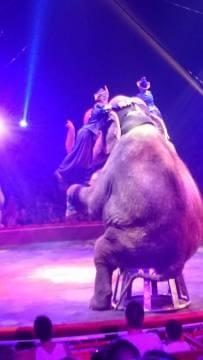 elephant-cirque