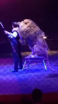 lion-cirque