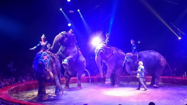 spectacle-animaux-cirque
