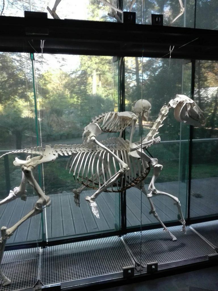 mur-des-squelettes.jpg