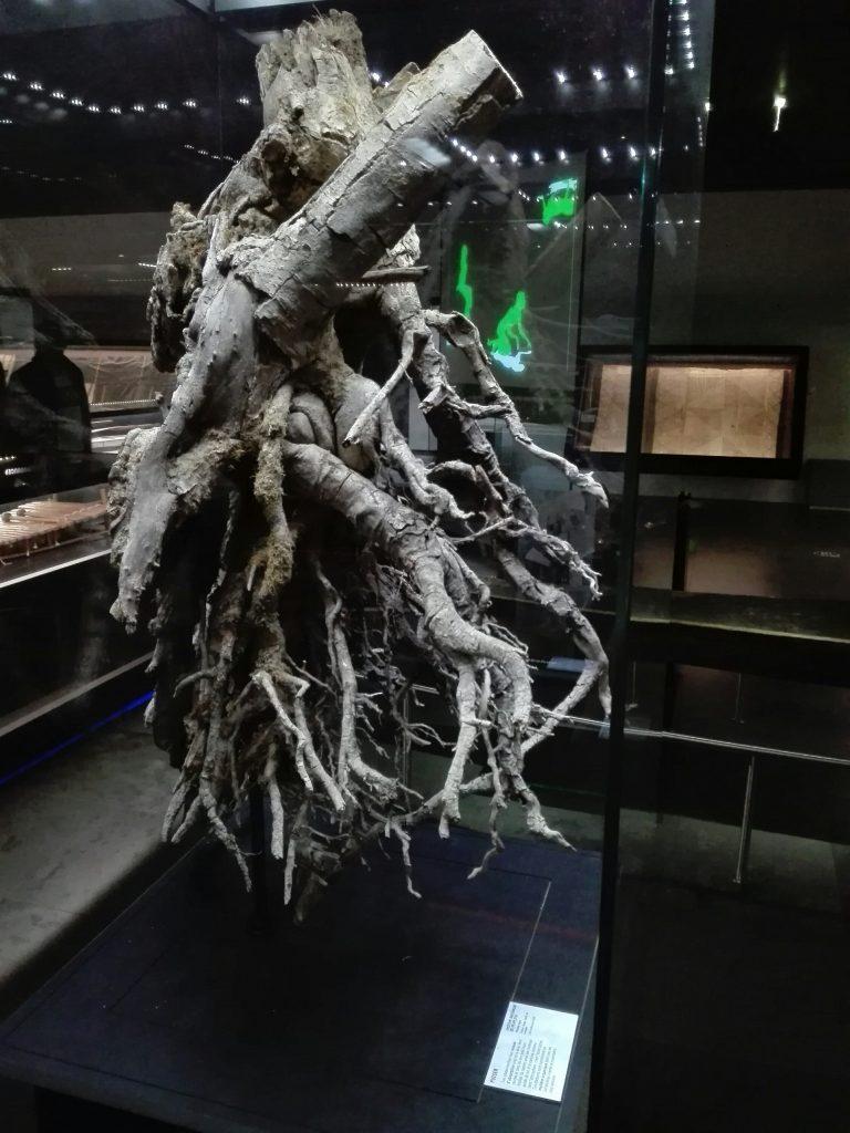 racines.jpg