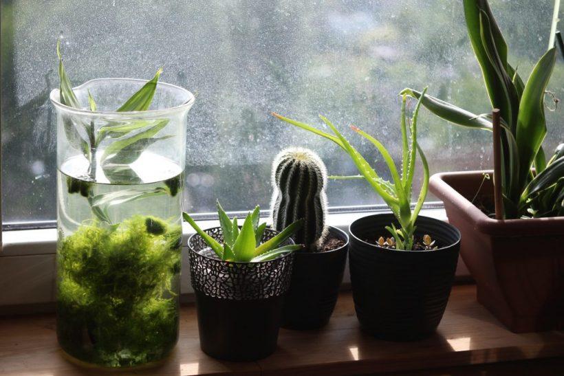 janvier-2019-plantes