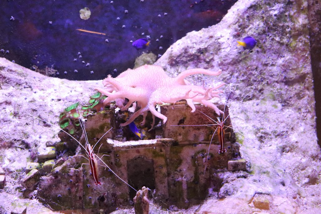 petits-poissons-seaquarium