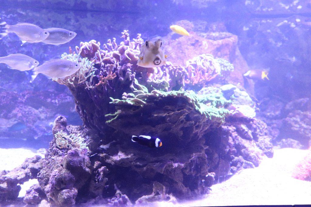 poissons-grau-du-roi