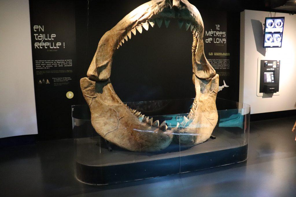 mâchoire-megalodon