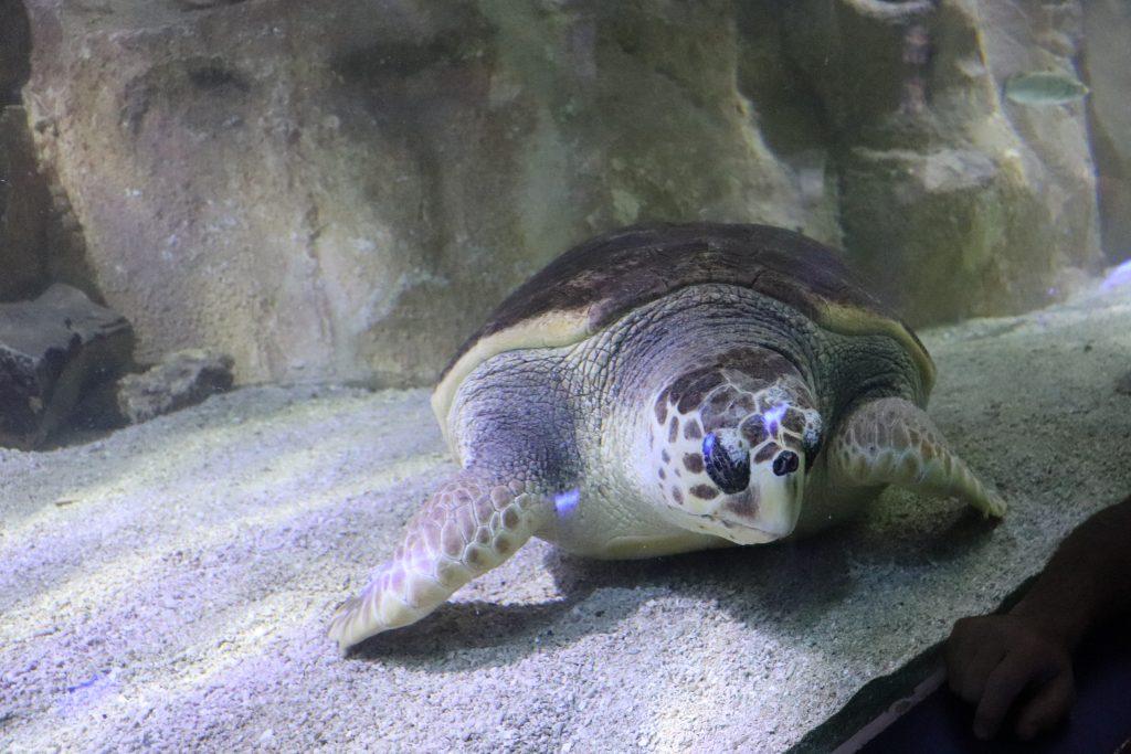 tortue-de-mer