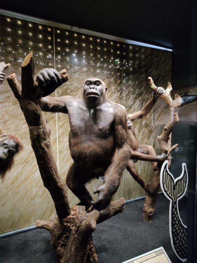 musee-histoire-naturelle-toulouse-animaux