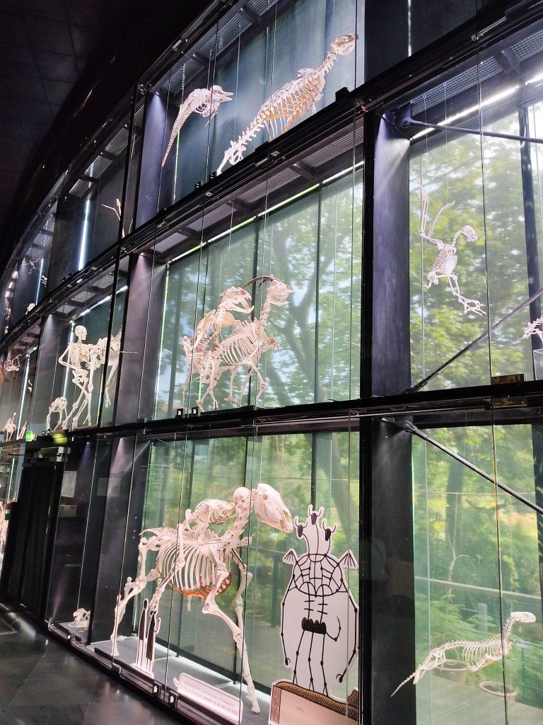 musee-histoire-naturelle-toulouse-mur-squelette