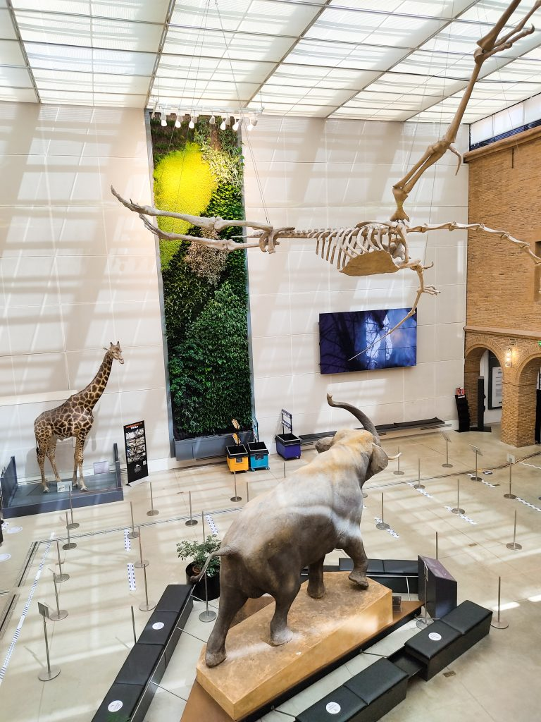 musee-histoire-naturelle-toulouse